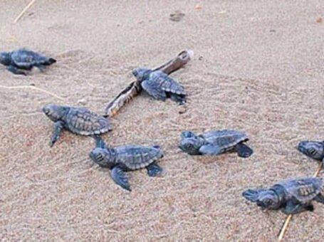ΑΡΧΕΛΩΝ – Κέντρο Διάσωσης Θαλάσσιων Χελωνών