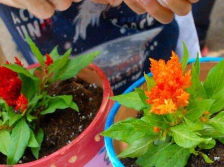 Εργαστήρι κηπουρικής με την Λιμπελούλα